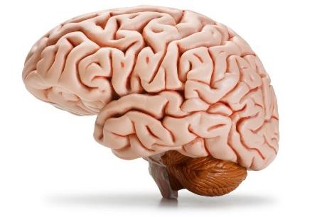 brain_1.jpg