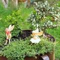 Tündérkertek növényei: kislevelű madárbirs
