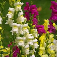 15 növény, amit a gyerekek imádnak a kertben