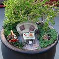 Tündérkertek növényei: Sedum pachyclados