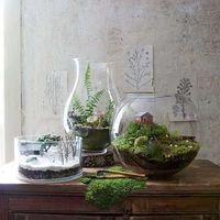 A legjobb növények floráriumba