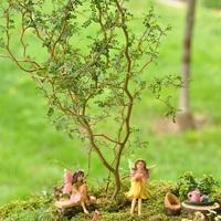 Minikert mini növényekkel