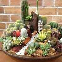 Beltéri minikertek növényei