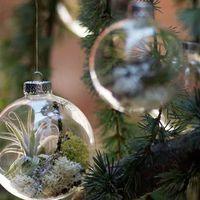 Saját készítésű karácsonyfadísz élő növénnyel