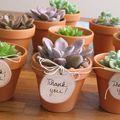 Esküvői köszönőajándékok növényekkel