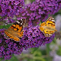 A pillangócsalogatás praktikái