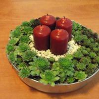 Adventi koszorú kövirózsákkal avagy minikert gyertyákkal