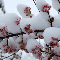 Télen virágzó és díszítő növényeink