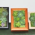 Növénykép készítése íróasztalra vagy falra