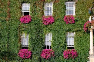 Hőszigetelés növényekkel