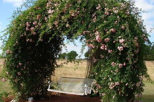 Régi trambulinból kerti dekoráció...