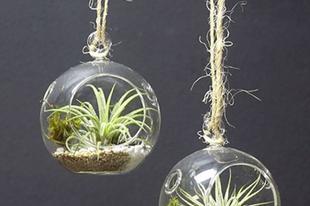 Apró floráriumok üveggömbben