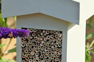 Rovarhotel, avagy így gondoskodjunk a rovarokról...
