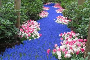 Virágágyás ötletek