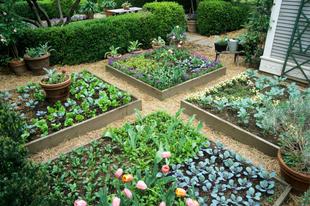 Kicsi kertek, teraszok növényei