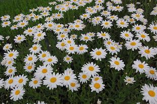 Lusta kertészek növényei