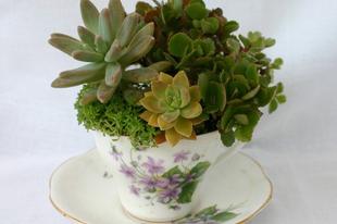 Egy csésze kertet?
