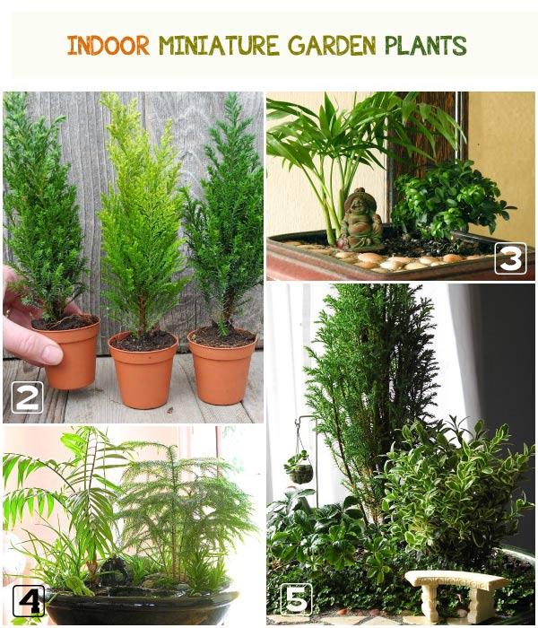 indoor-miniature-garden-plants.jpg