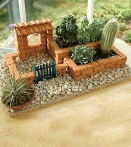 kaktusz_kert.jpg