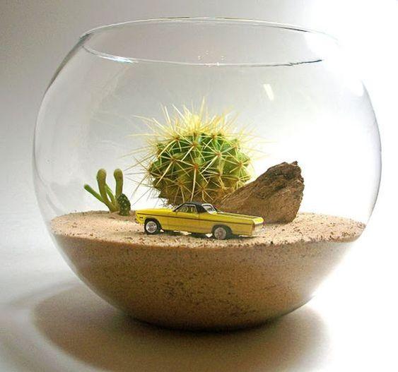 kaktuszok.jpg