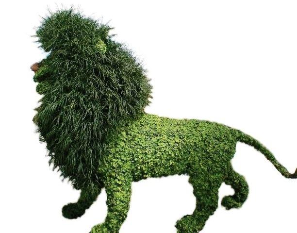 oroszlan-thelovelyplantscom.jpg
