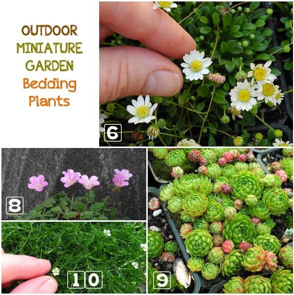 outdoor-miniature-garden-bedding-plants-1a.jpg