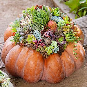 pumpkin_with_succulent.jpg