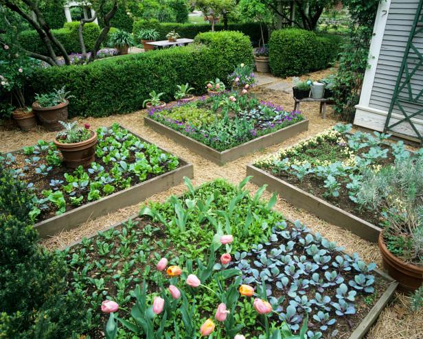 small_garden-vegetable.jpg