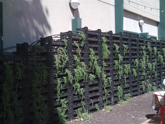 vertical_garden_trunk_bar_melbourne.jpg