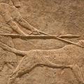 Kutyavilág az ókorban