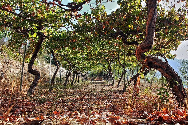 ancient_agriculture_in_sataf_jerusalem_israel_29700647751.jpg