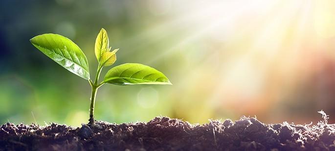 growing_plant_crop.jpg