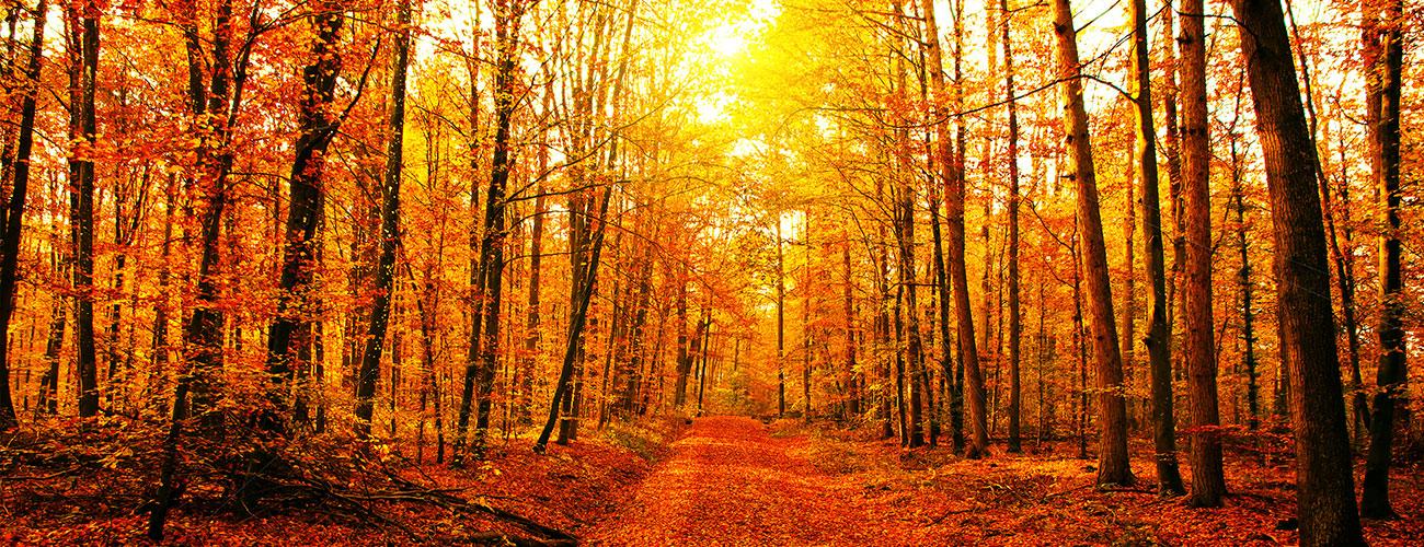 home-banner-fall.jpg