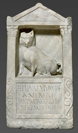 roman-maltese-dog.jpg