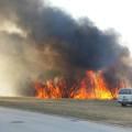 Rongálás vétség gyanúja miatt nyomoznak a lángok martalékává lett élőhely ügyében