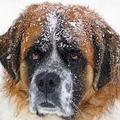 Kitiltották a bicskei gyepmesteri telepről az önkéntes bicskei kutyamentőket