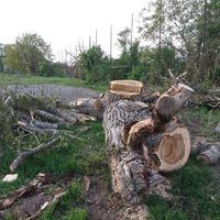 Fákat döntöttek - tájékoztatás nélkül - az iskolaudvaron