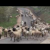 Bandi bácsi emeli kalapját - Film az Etyek-Bicske-Csabdi-Tarján kerékpárútról
