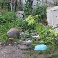 Állatbarát bicskeiek kérik a jegyző és a rendőrség intézkedését