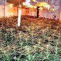 A legalizáció ellen vagy? Te mocskos drogdíler!