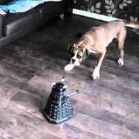 Dalek vs boxer