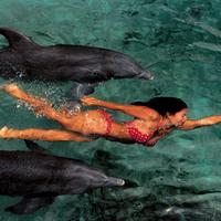 Delfinekkel úszó