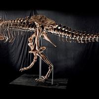Akarsz saját T-Rexet a nappalidba?