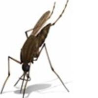 Nyílt lapokkal a malária ellen