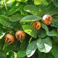 Ezeket a gyümölcsöket ették dédszüleink