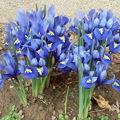 Tavaszjelzők