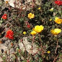 A leköszönő nyár virágai
