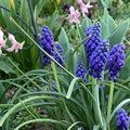 Tavaszi kerti virágok