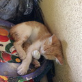 Vendég cica :)