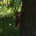 Ismét van mókusunk!